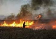 القناة 13: جيش الاحتلال الإسرائيلي ينوي الرد على اطلاق البالونات الحارقة من غزة