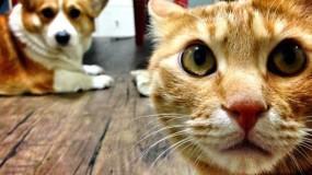 كوريا الجنوبية تقرر إجراء فحوصات كورونا على القطط والكلاب