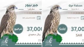 السعودية.. مفاجآت في مبيعات المزاد الدولي للصقور