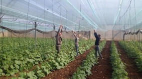 """""""الزراعة"""" تصرف دفعة مالية لـ 88 مزارعاً بقطاع غزة"""